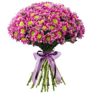 Хризантема кустовая фиолетовая