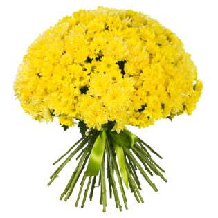 Хризантема кустовая желтая