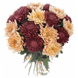 Хризантема одноголовая микс 2