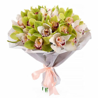 Орхидея зеленая
