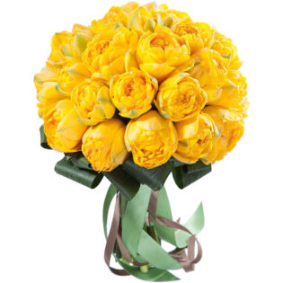 Пион желтый